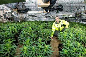 Cannabis-Pflanzen machen Anlegern Hoffnung. Jetzt gibt es sogar einen Marihuana-ETF (Foto: West Midlands Police, CC-Lizenz)