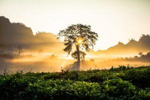 Vietnam als Anlagetipp: Vom Touristen- zum Investoren-Traum? (Foto: CC0 Lizenz)